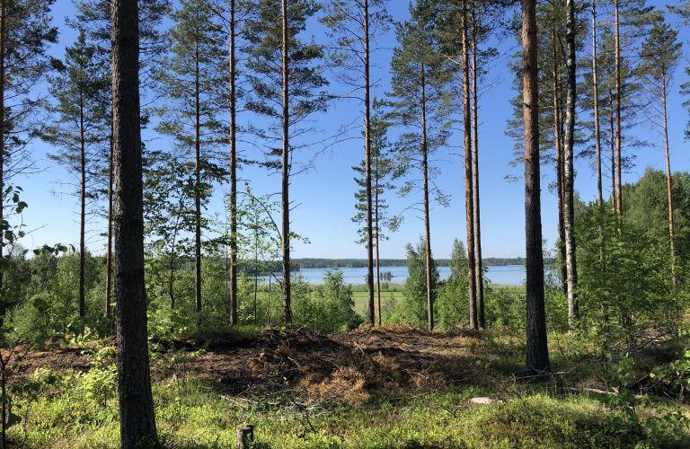 Näkymä Saimaalle Toiselta Salpausselältä lähellä Utulan kylää