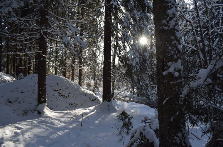 sunny winter day, Myllykoski, Ruokolahti