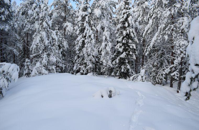 Snowshoes in snowy forest, Myllykoski, Ruokolahti