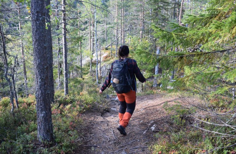 forest walk, forest, forest bath, Imatra, Lappeeranta, Saimaa