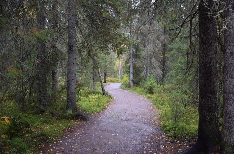 metsäpolku, metsäkävely, metsä, metsäkylpy, Imatra, Lappeenranta, Saimaa