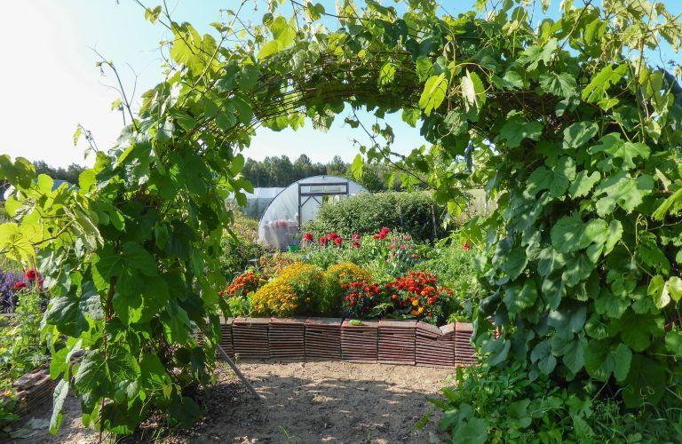 puutarhassa, in the garden, grapewine, makuja puutarhasta