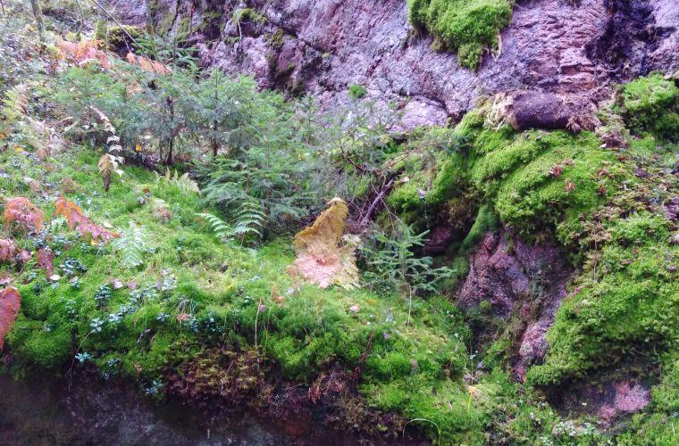 suomalainen metsä, metsäretki, luontoretki