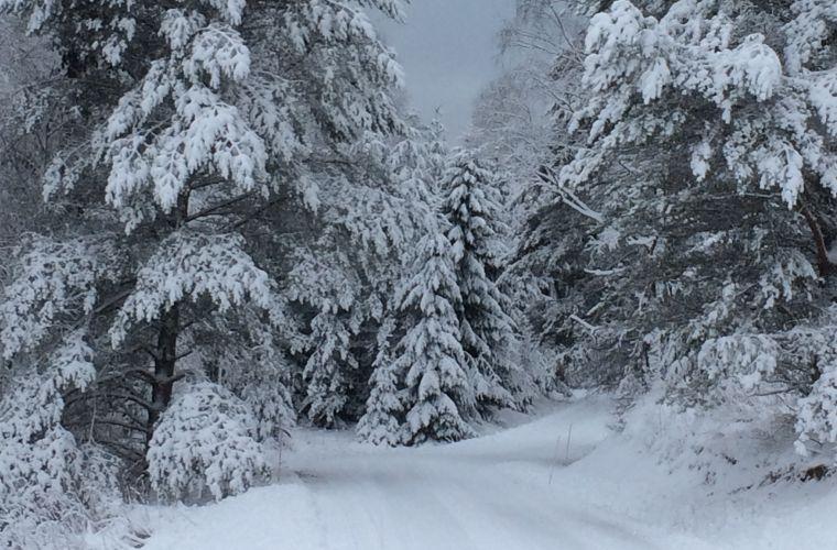 Talvisen metsän hämärä rauhoittaa